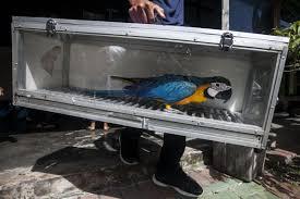 Polisi Kembali Gagalkan Penyelundupan 2960 Ekor Burung Liar